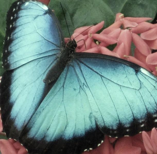 April 2: 'Blue'